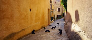 Cats in corsica village Royalty Free Stock Images