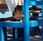 Cats Of Crete Greece Stock Photography