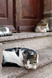 Cats in Cunda Island Stock Photography