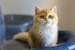 Cats cute stock image