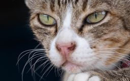 Cats are cute pets and like to be close to the owner. But the cat`s deep habit is bad. NCats are cute pets royalty free stock images