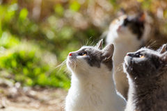 Cats. In Cyprus Stock Images