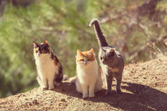 Cats Royalty Free Stock Photography