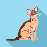 Cats of different breeds with long shadow Stock Photo