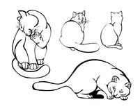 Cats in different poses. Vector illustration Stock Photography
