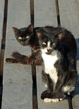 Cats on the dock at the port waiting for fish Stock Images