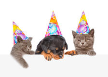 Cats and Dog in birthday hats peeking from behind empty board. isolated on white Royalty Free Stock Image