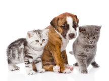 Cats and dog in front. isolated on white background Royalty Free Stock Photography