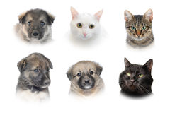 Cats and dogs Stock Image