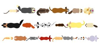 Cats and dogs border set. Various breeds of cats and dogs border set from high angle view on white royalty free illustration