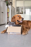 Cats and dogs. And cardboard stock photography