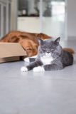 Cats and dogs. And cardboard stock images