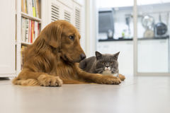 Cats and dogs. Indoor shooting cats and dogs in the family Stock Photos