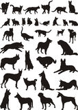 Cats and dogs, vector illustrations Royalty Free Stock Image