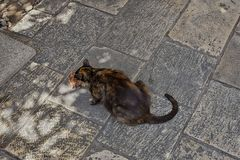 Cats of dubrovnik Royalty Free Stock Photo