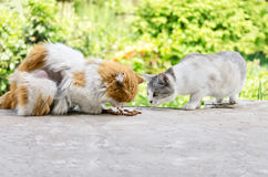 Cats eat cat food Royalty Free Stock Photography