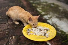 Cats eating rice. A small cats eating rice Royalty Free Stock Photo