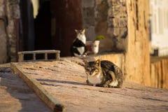 Cats in Essaouira Stock Photos