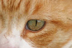 Cats eye. A close up of a cats eye Stock Images