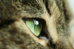 Cats eye stock photo