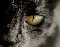 Cats eye. Black cat and macro eye Stock Images