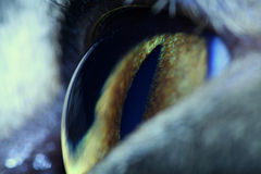 Cats eye Stock Image