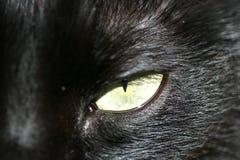Cats Eye. A nice close up of a cats yellow eye Stock Photos