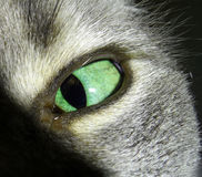 Cats eye Royalty Free Stock Image