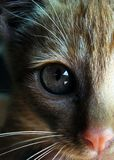 Cat eye closeup  Stock Images