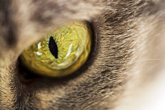 Cats eye. Extreme close up of cats eye Royalty Free Stock Photo