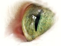 'Cats eye' Royalty Free Stock Images
