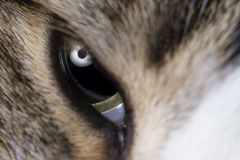 Cats eye macro shot Royalty Free Stock Image