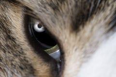 Cats eye macro shot Royalty Free Stock Image