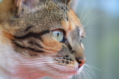 Cats eye. Neighbour cat visit me almost every day Royalty Free Stock Photo