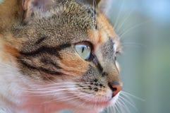 Cats eye royalty free stock photo