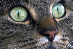 The Cat´s eyes Stock Images