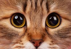 Cats eyes Stock Photography