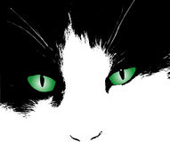 Cats eyes. Cats face with green eyes