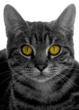 Cats eyes Stock Image
