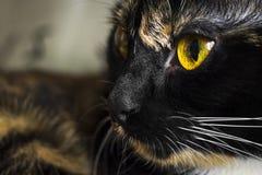 Cats eyes close Stock Photos