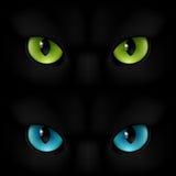 Cats eyes Royalty Free Stock Photo