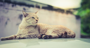 Cats eyes staring sternly. Cats eye gaze in awe on the roof Stock Images