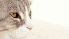 Cats Eyes stock footage