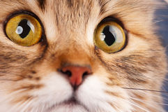 Cats eyes Stock Photo
