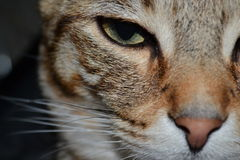 Cats face stock photography