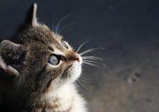 Cats face Royalty Free Stock Photo