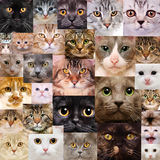 Cats faces Royalty Free Stock Photo