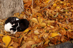 Cats and fall Royalty Free Stock Photos
