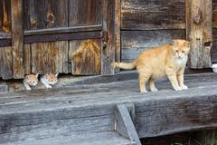 Cats family on a farm Royalty Free Stock Photos
