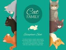 Cats family show banner grooming or veterinary feline flyer vector illustration. Cute kitten pet poster. Funny animal. Studio. Lovely friendship advertisement stock illustration